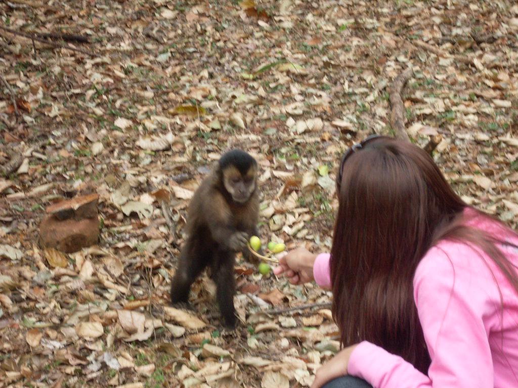 Alimentando o Macaco-Prego 2