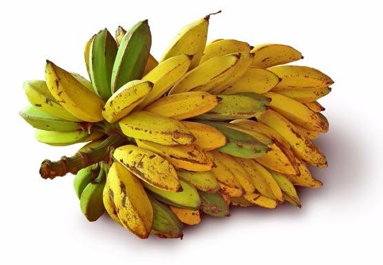 Banana Terra 5