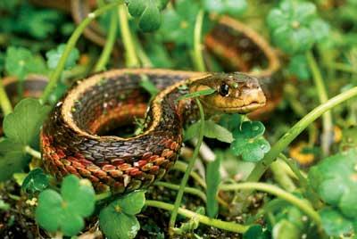 Cobras da Bahia 4