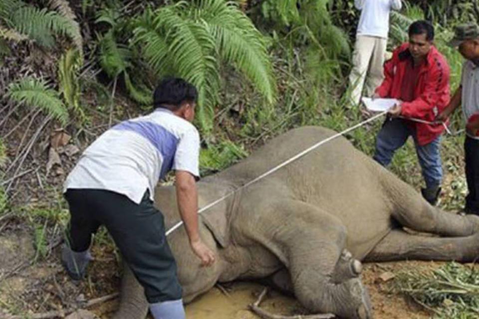 Elefantes Mortos 4