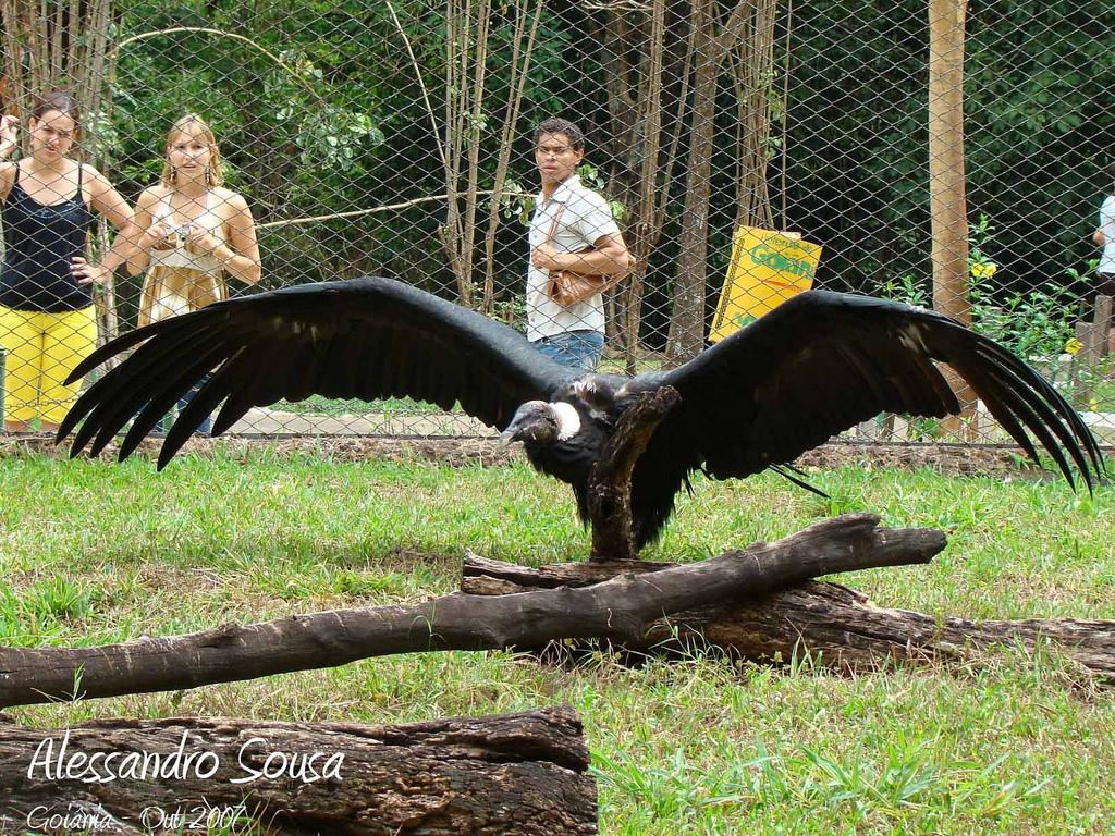 Condor dos Andes 1