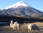 Cotopaxi National Park 3