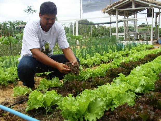 Hortaliças e Brassicaceae Importância Econômica 1