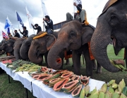Elephants eat fruit during a buffet as part of the annual King's Cup elephant polo tournament in the southern Thai resort town of Hua Hin on September 5, 2011. The King's Cup tournament, which is held to promote elephant conservation, is taking place from September 5 to 11.   AFP PHOTO / Pornchai KITTIWONGSAKUL