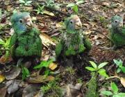 Filhotes de Papagaio 3