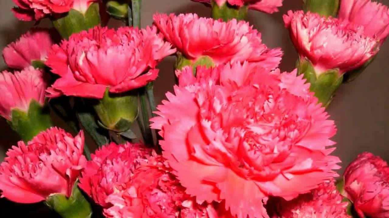 Flor Cravo 3