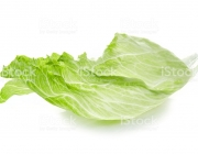 Leaf of Iceberg lettuce isolated on white background