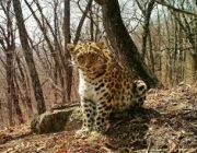 Fotos de Leopardos 5
