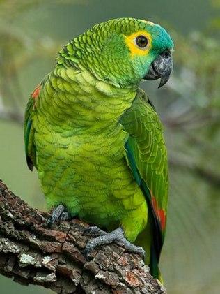 Fotos de Papagaios 1