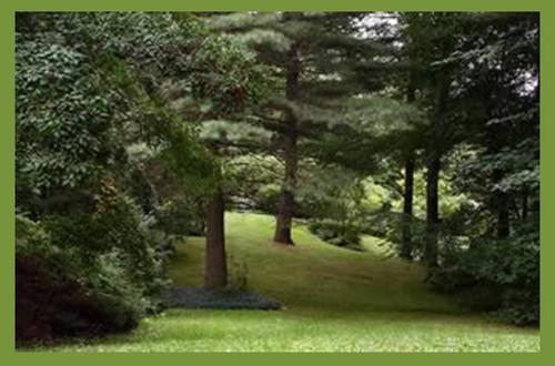 Jardins Florestais 4