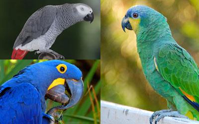 Papagaios 2
