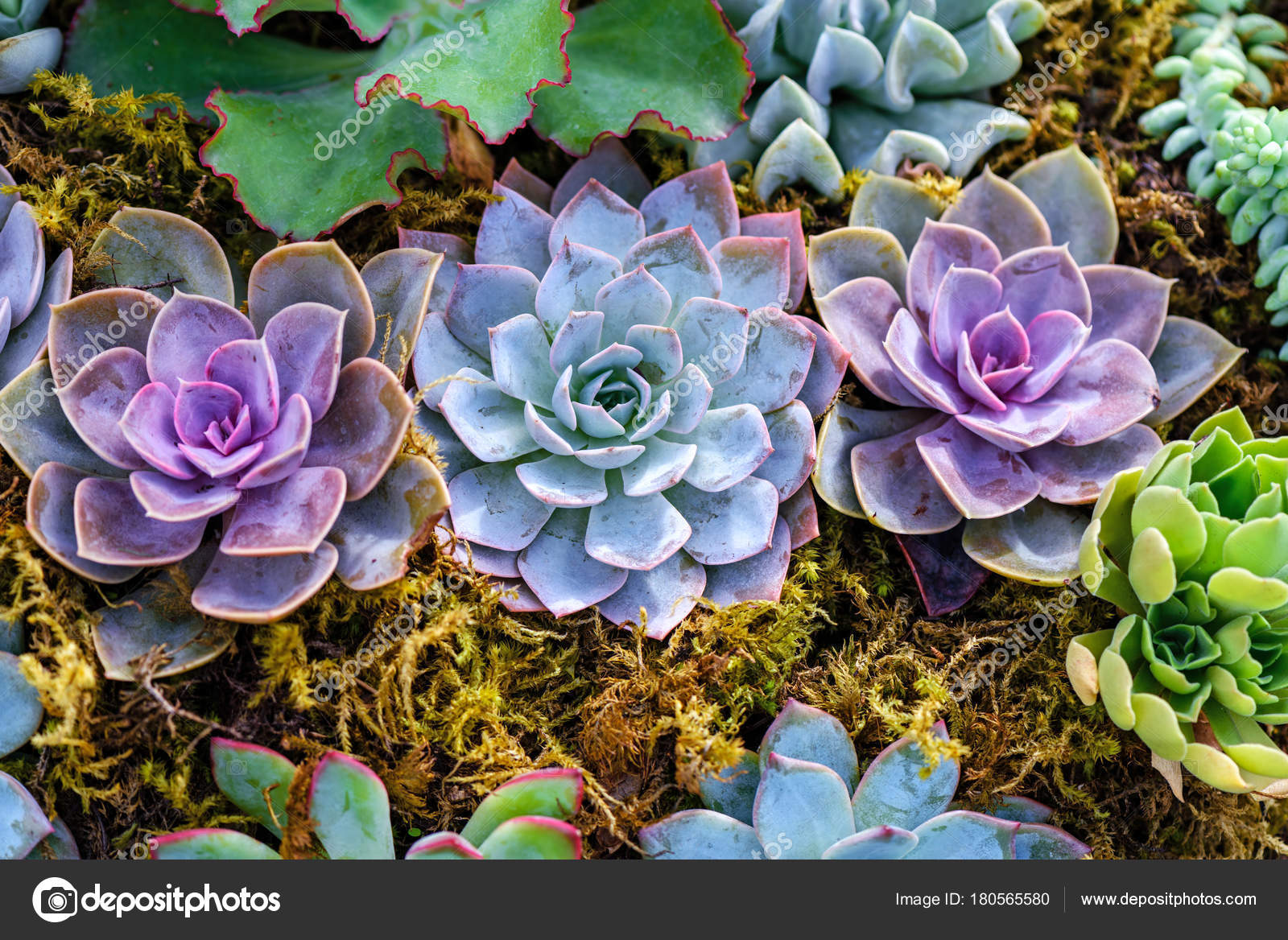 top view of small ornamental plants of thorny cacti with spines and leaves