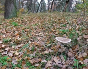 panoramic image of the forest litter in autumn forest in October