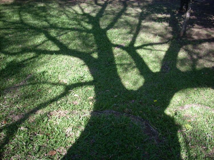 Sombra de Árvore