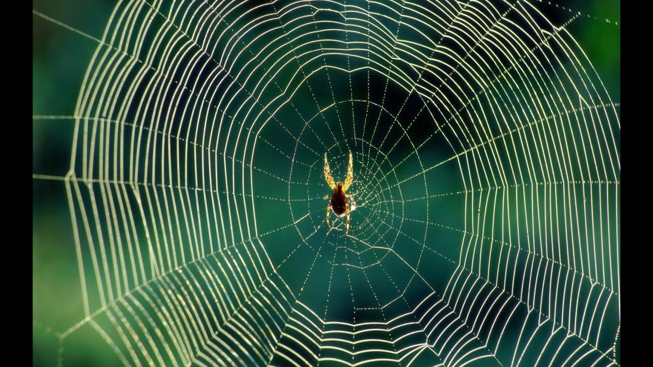 Aranha na Teia