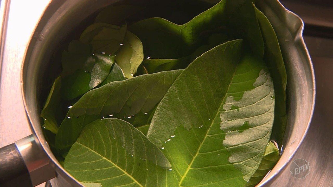 Fazendo Chá de Folhas de Araça