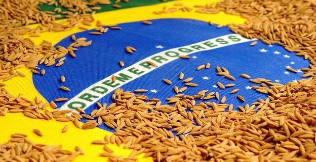 Quem Trouxe O Arroz Para O Brasil? Como Ele Chegou?