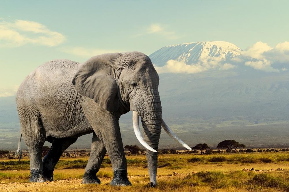 As Presas do Elefante (Marfim)