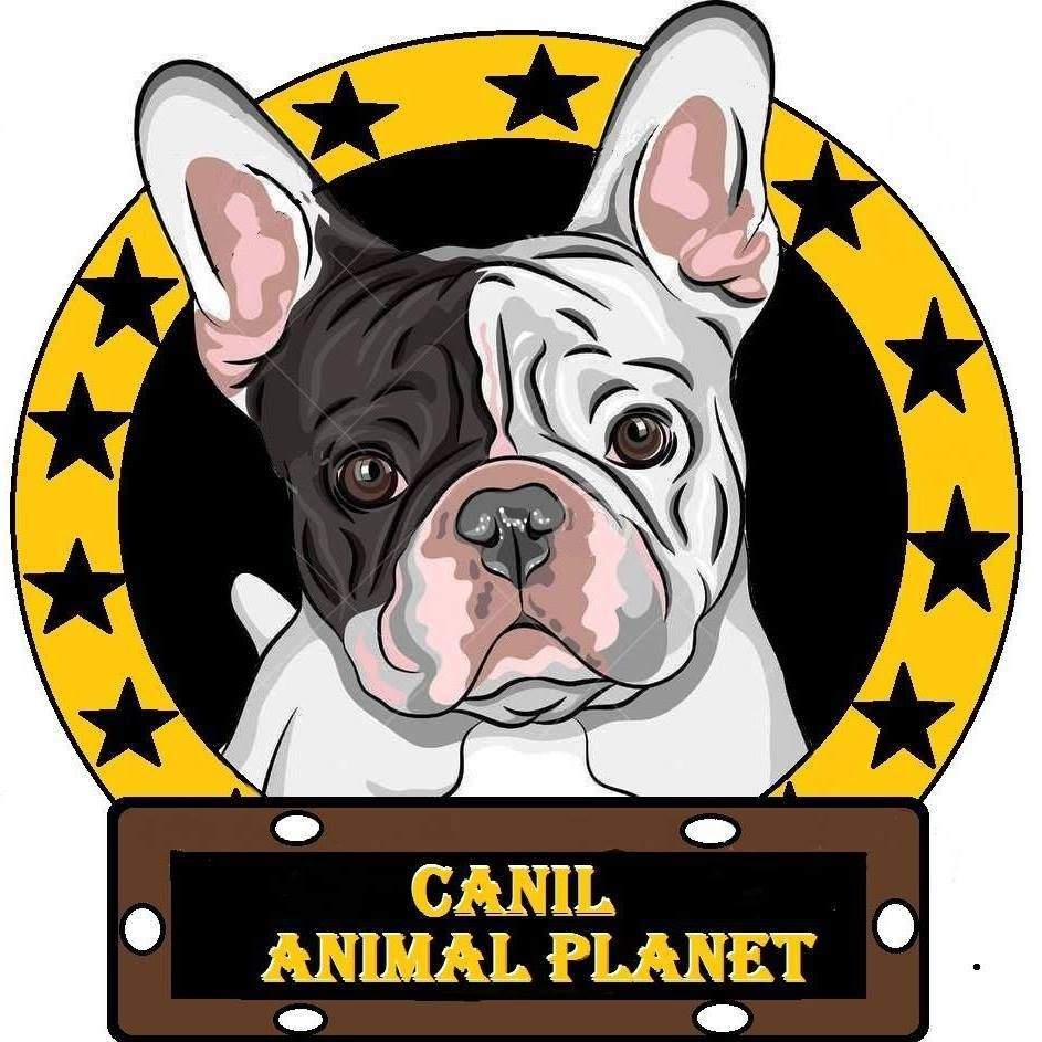 Canil Animal Planet