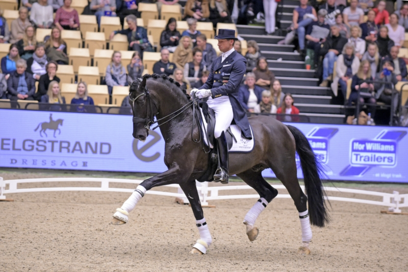 Danish Warmblood Marchador