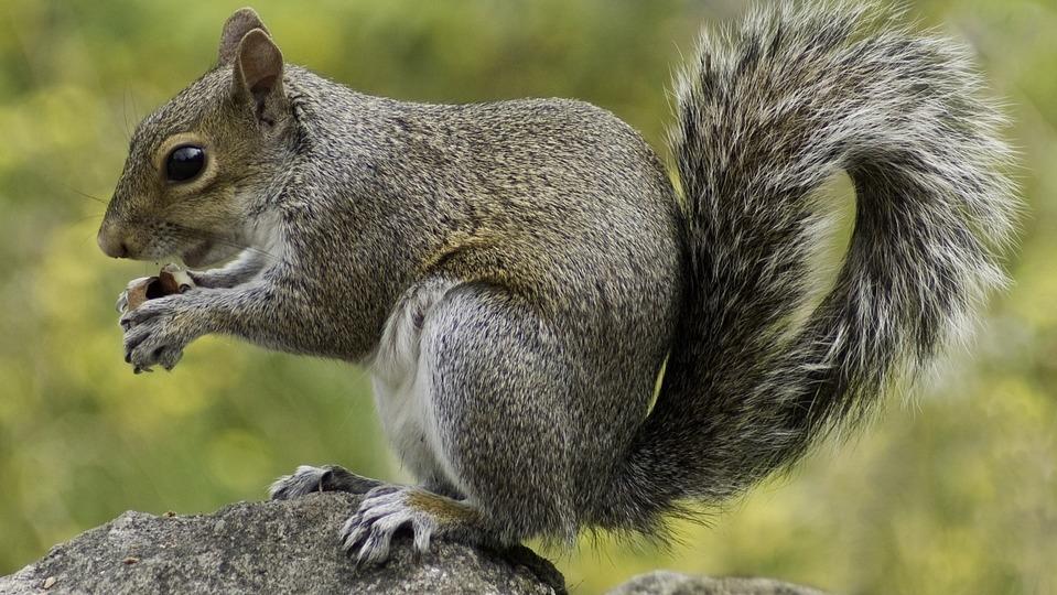 Esquilo Fotografado de Lado