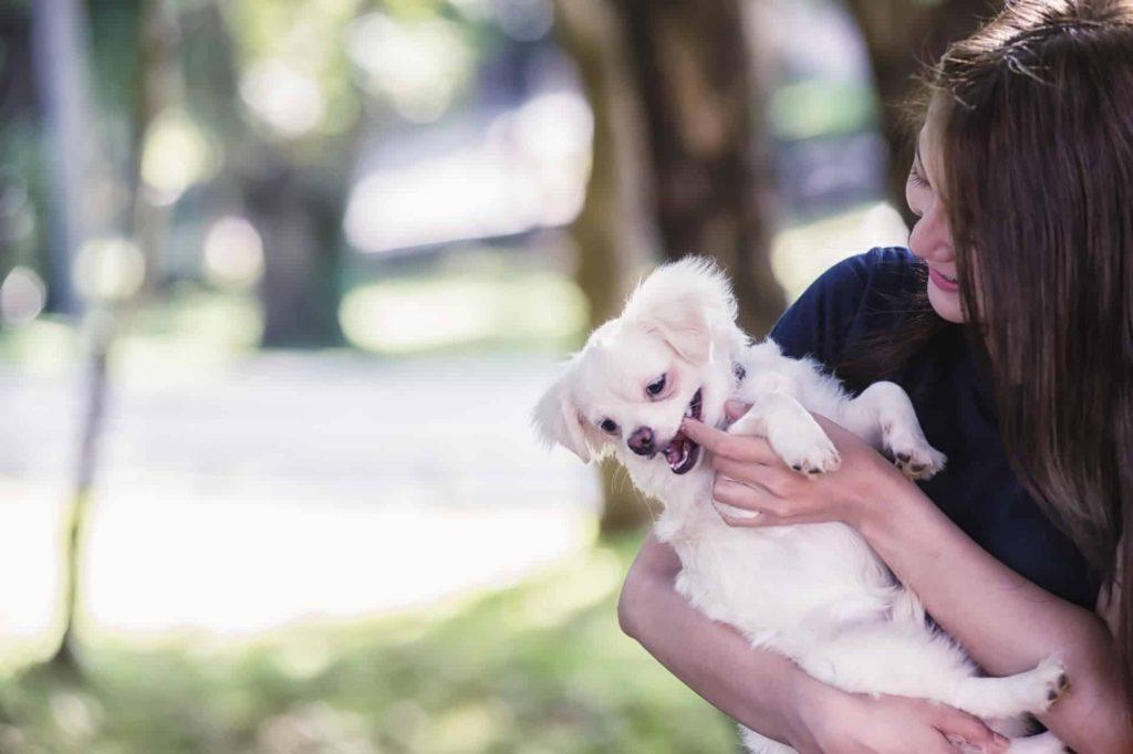 Cachorros Mordendo com Carinho