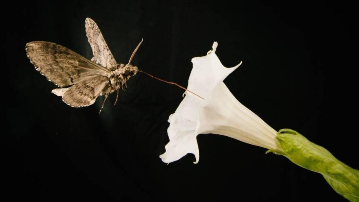 Mariposa na Flor