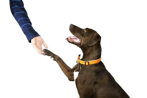 Ensinando o Cão a Ficar em Pé